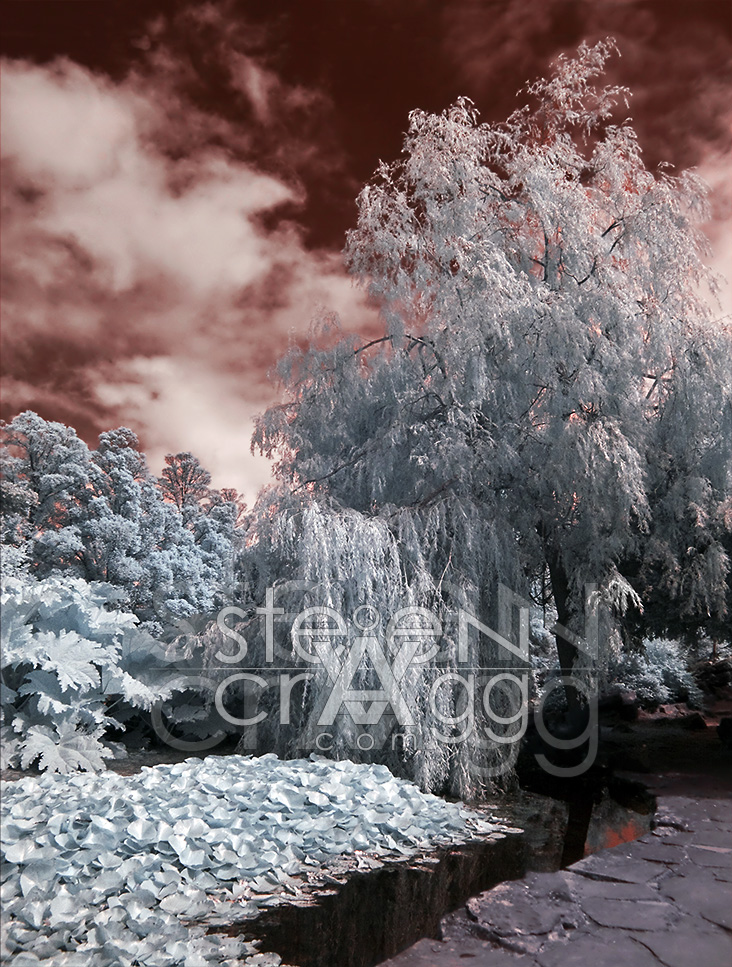 BlueWillow_StevenCragg_infrared-photography_web